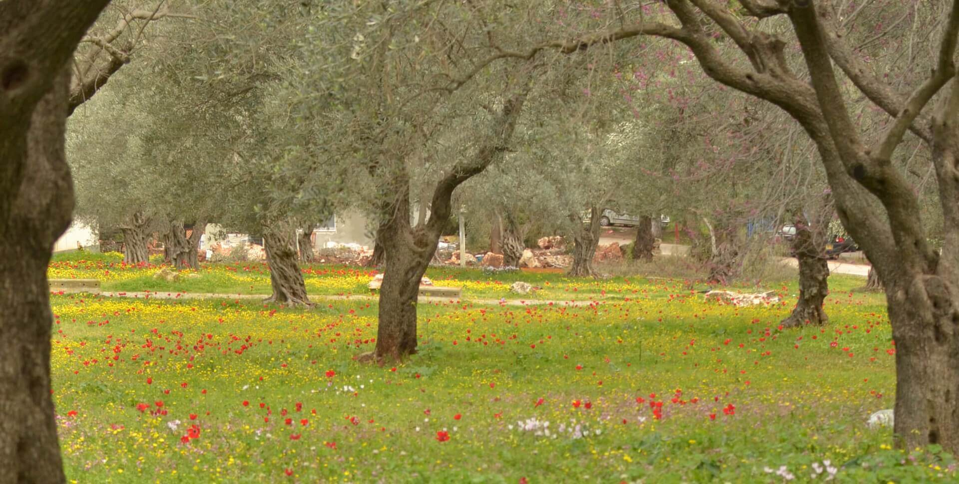 יער הזיתים